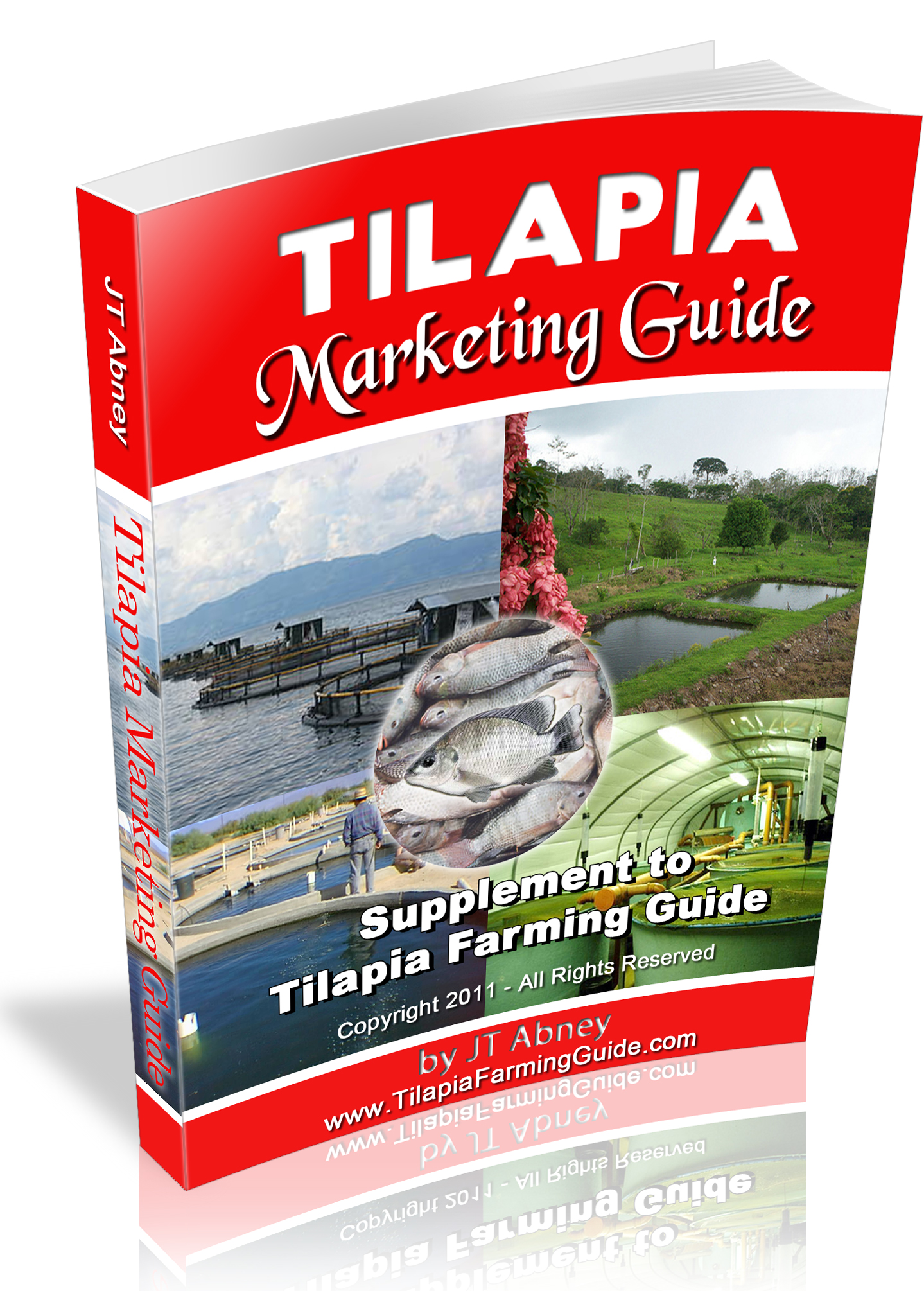 tilapia marketing